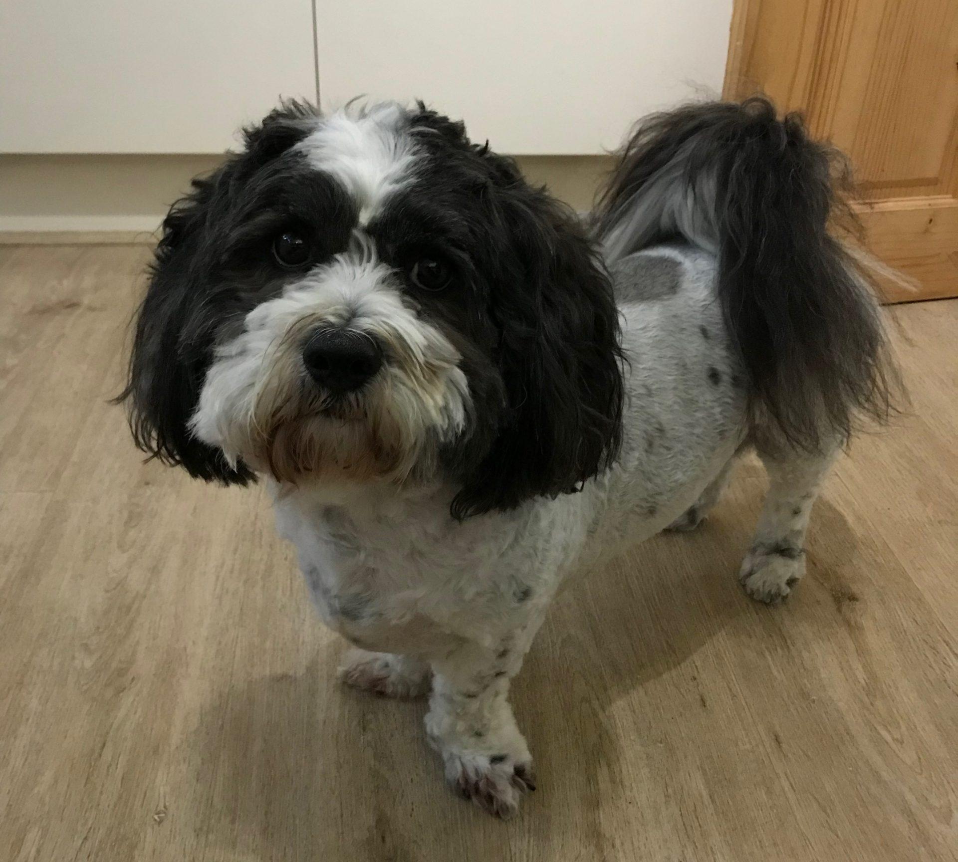 Percy haircut
